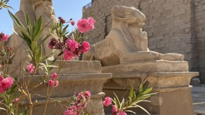 Adventure in Egypt –Day 7–